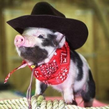 Piggly Piggleton