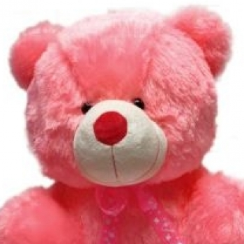 Teddy Red