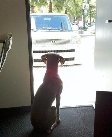 Dog-Office