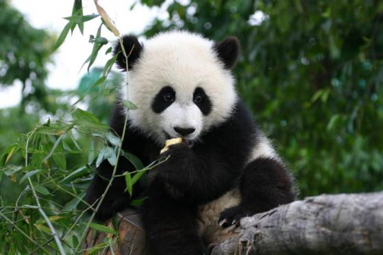 Pando Coin debuts on leading U.S. crypto exchange, Bittrex